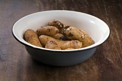 Fresh Potatoes from the garden Stock Photography