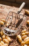 Fresh Potatoes on the market Royalty Free Stock Photos