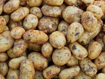 Fresh Potatoes at Market Stall. Freshly dug potatoes for sale at a fresh fruit and vegetable market stall stock photos