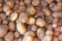 Fresh potatoes Royalty Free Stock Photo