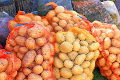 Fresh potatoes in sack Stock Images