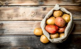 Fresh potatoes in the sack royalty free stock photography