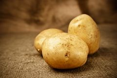 Fresh potatoes on the sacking background Stock Photos