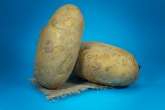 Fresh potatoes on a square of hessian. Raw, unwashed, unpeeled potatoes on a square of hessian isolated on blue background stock photos