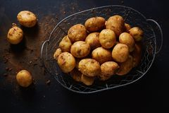 Wire basket with harvested potatoes Stock Photos