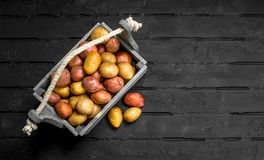 Fresh potatoes in a wooden box royalty free stock photo