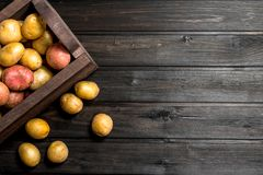 Fresh potatoes in a wooden box royalty free stock image