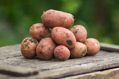 Fresh potatoes on a wooden table Stock Images