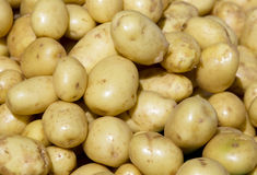 Fresh potatos Stock Images