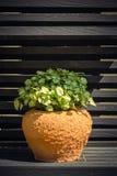 Fresh pothos Stock Photos