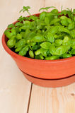 Fresh Potted Basil Royalty Free Stock Photography
