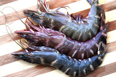 Fresh prawn Stock Images