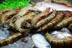Fresh prawn Royalty Free Stock Photography
