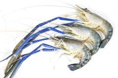 Fresh prawn Stock Images