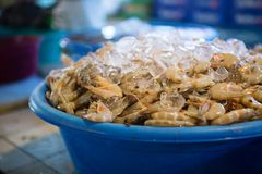 Fresh prawn on a fish market Stock Images