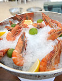 Fresh prawn on ice Royalty Free Stock Photos