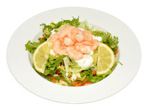Fresh Prawn Salad Stock Images