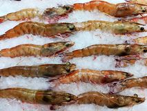 Fresh prawn. On sale Stock Photography
