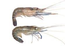 Fresh prawn or shrimp isolated on white background Stock Images