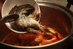 Fresh prawn for the spicy and sour herb soup by chef. Stock Image