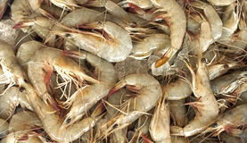 Fresh prawns Stock Photography