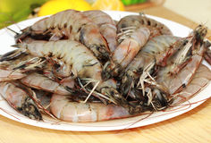 Fresh Prawns. A plate of fresh giant shrimp or prawns on a white plate ready for cooking royalty free stock images