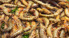 Fresh Prawns Royalty Free Stock Photography