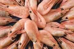 Fresh prawns Royalty Free Stock Photo