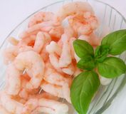 Fresh prawns Royalty Free Stock Photos