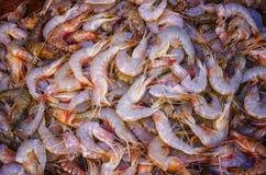 Fresh prawns background Stock Images
