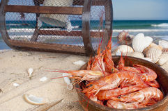 Fresh prawns on the beach Stock Photos
