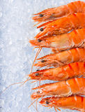 Fresh prawns on crushed ice. Royalty Free Stock Photography