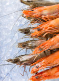 Fresh prawns on crushed ice. Stock Photo