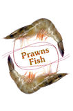 Fresh prawns fish Stock Images