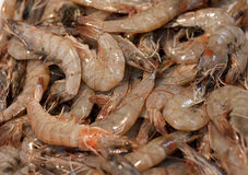 Fresh Prawns Stock Image