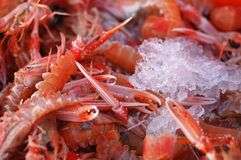 Fresh prawns on ice royalty free stock images