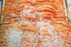 Fresh prawns on ice for sale. At a market Stock Image