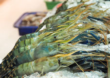 Fresh prawns on ice in seafood market Royalty Free Stock Images