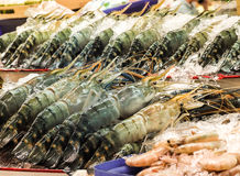 Fresh prawns on ice in seafood market Royalty Free Stock Photo