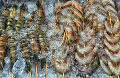 Fresh Prawns   in ice Stock Photo