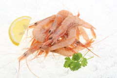 Fresh prawns isolated on ice Royalty Free Stock Photography