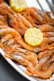 Fresh prawns Stock Images