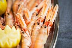 Fresh prawns Royalty Free Stock Image