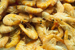 Fresh prawns Stock Images