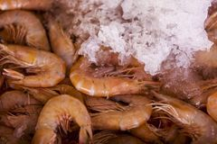 Fresh prawns for sale at a market. Close up view at fresh prawns for sale at a market stock photo