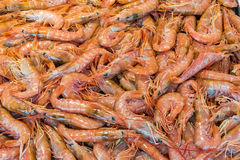 Fresh prawns for sale a market. In Palermo, Sicily Stock Photography