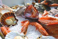 Fresh prawns and scallop shells exposed for selling. Stock Photography