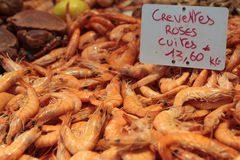 Fresh Prawns Stock Photos