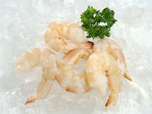 The fresh prawns without shell Stock Image