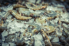 Fresh Prawns shrimp with ice at the market for sell. Shrimps Top view. Stock Image